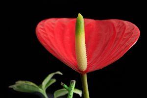 Мифы и легенды о цветке