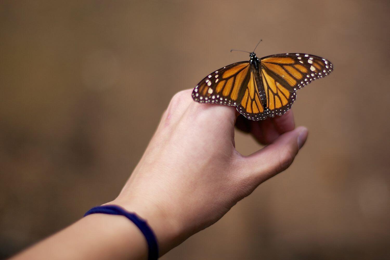 Что означает, если бабочка села на руку