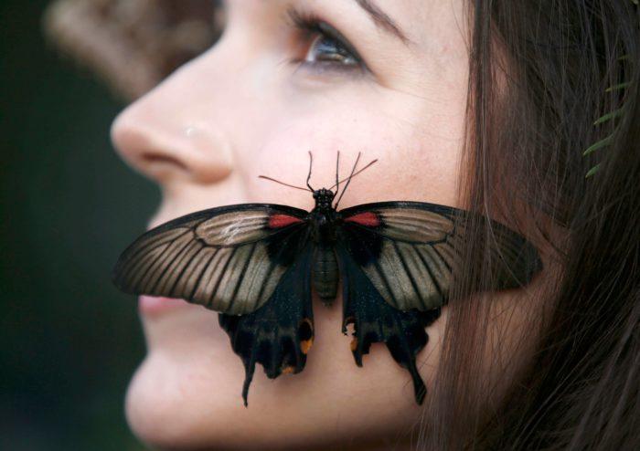 Бабочка села на щеку