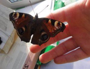 Исторические корни суеверия о бабочке