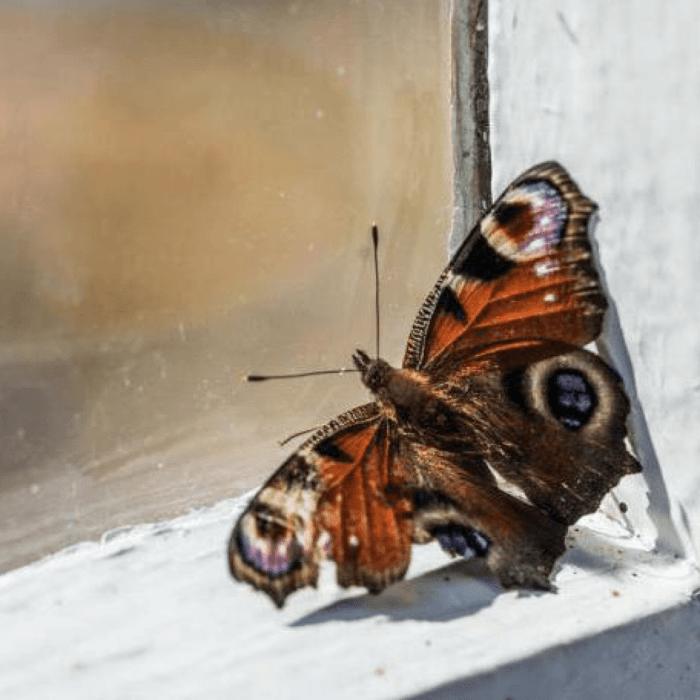 Бабочка села на окно