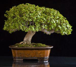 Красивое денежное дерево