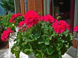 Объективные причины не держать дома цветок