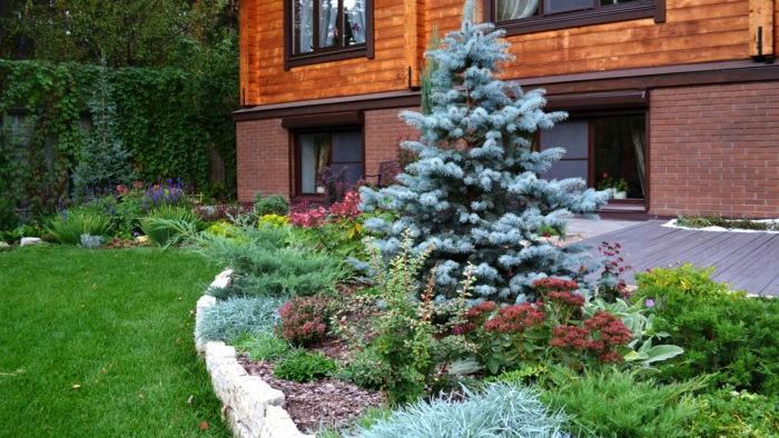 Посадить ель возле дома
