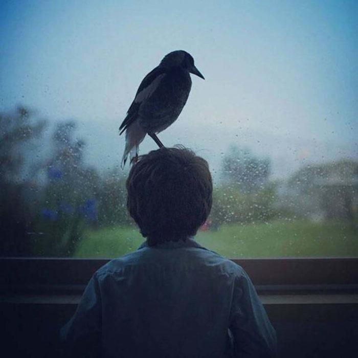 Ворона села сверху