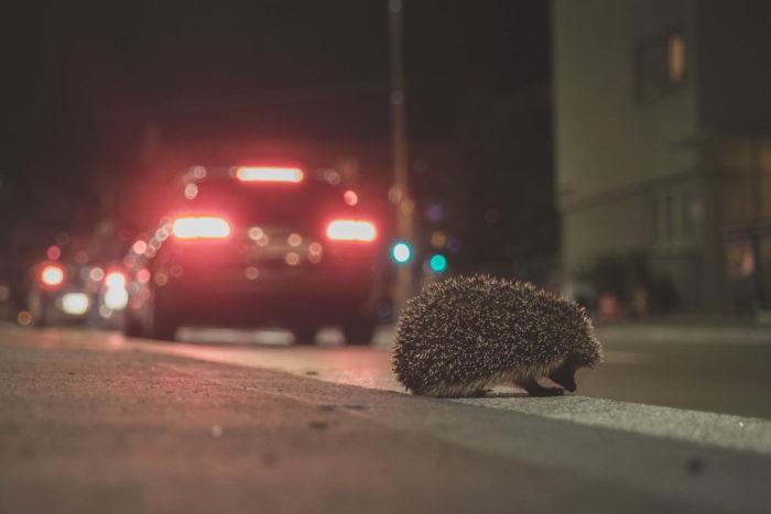 Встретить на дороге
