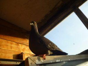Негативное влияние предзнаменования о птице