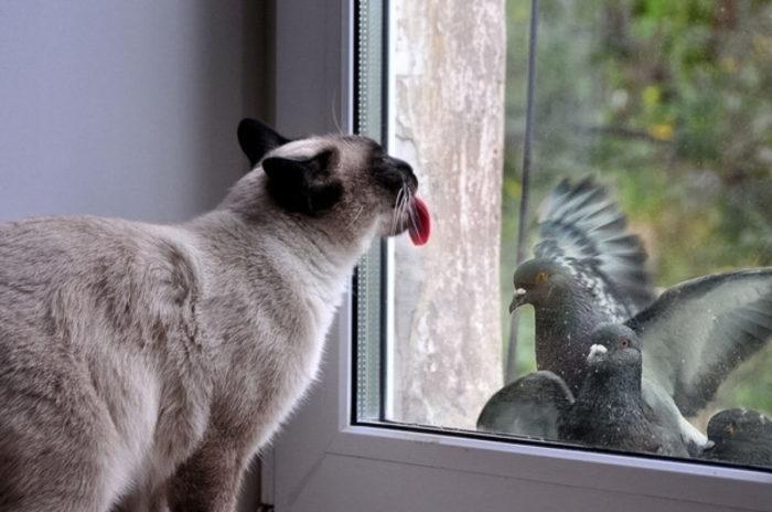 Голубь стучится в окно