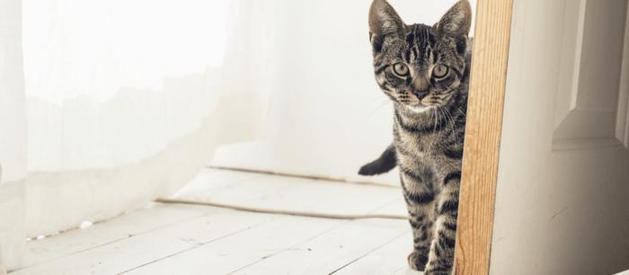 Чужая кошка пришла в сентябре