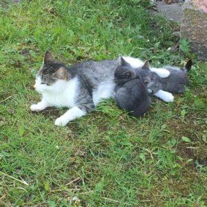 Кошка пришла с котятами