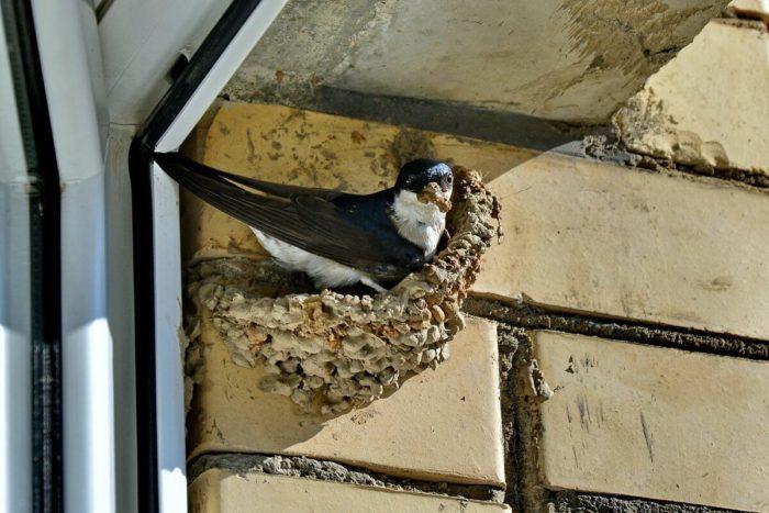 Гнездо возле окна