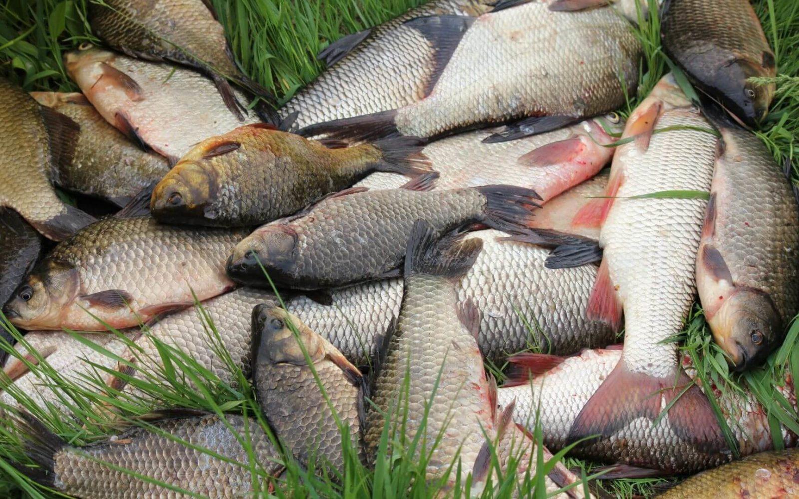Проверенные заговоры на удачную рыбалку