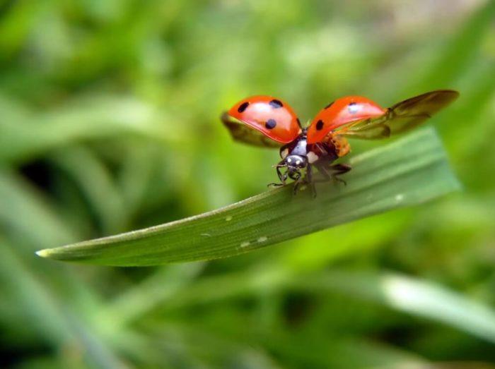 Суеверия, связанные с насекомым
