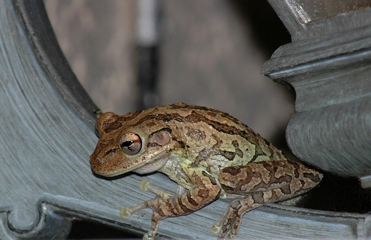 Приметы, связанные с лягушкой в доме