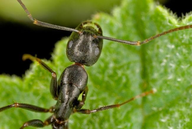 Что символизирует муравей