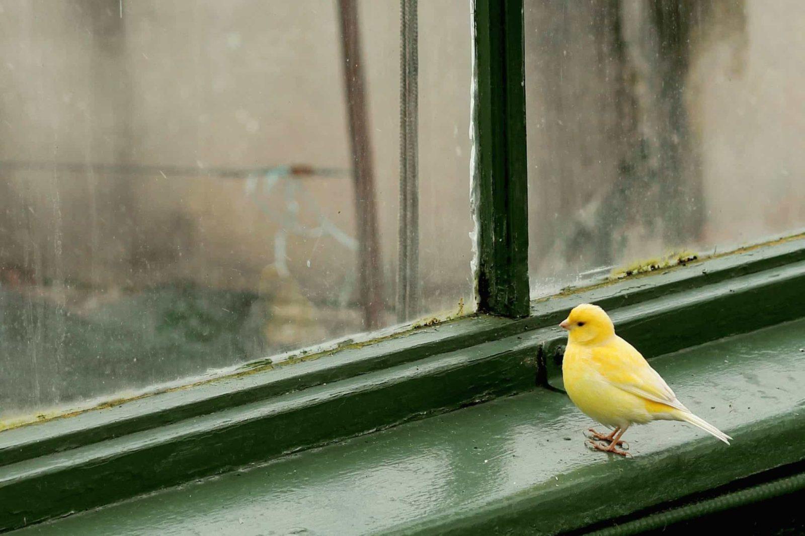 Птица села на подоконник