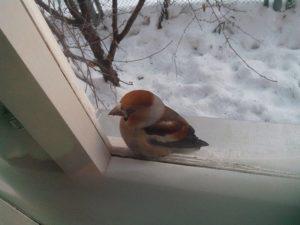 Особенности поведения птицы