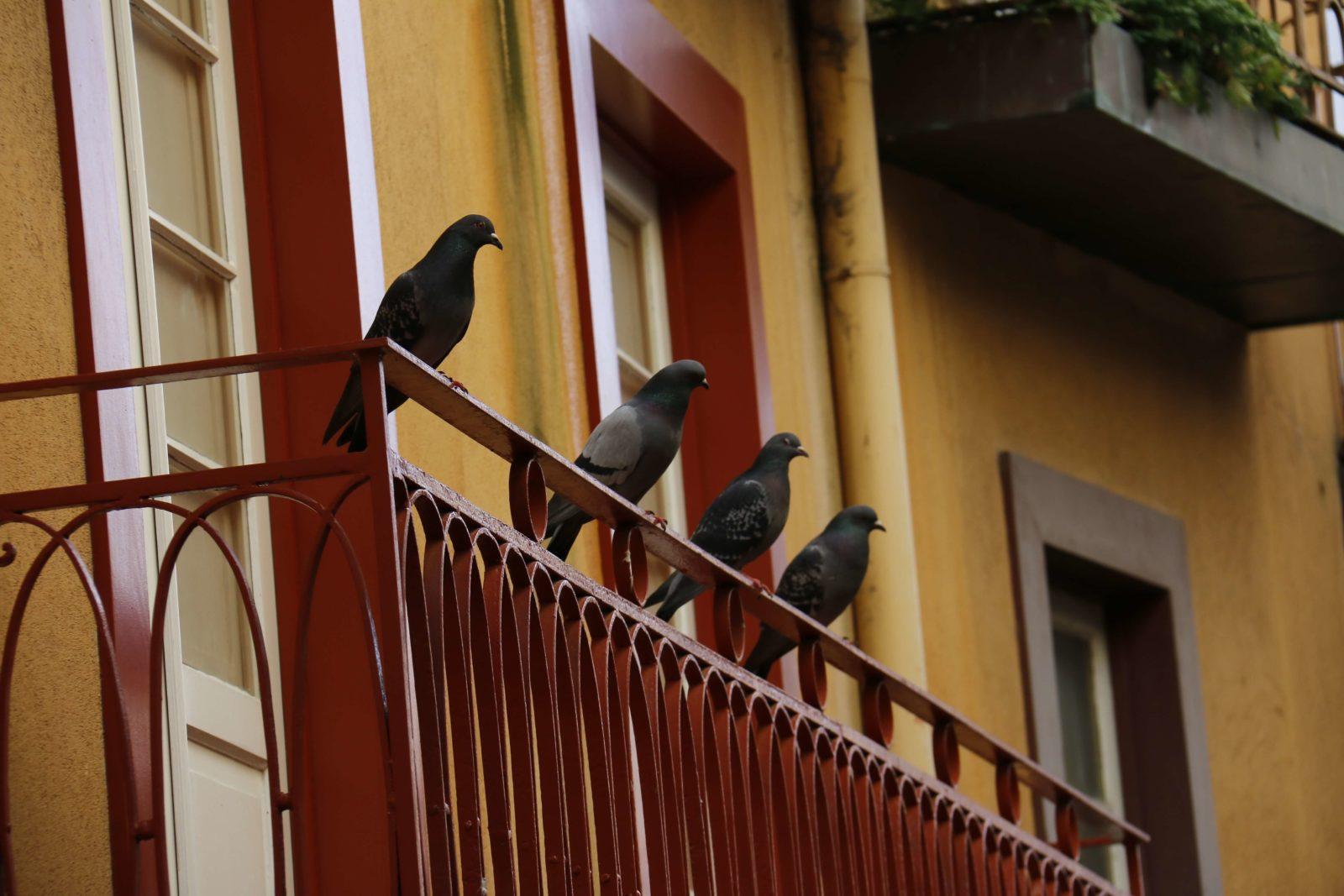 Птица залетела на балкон