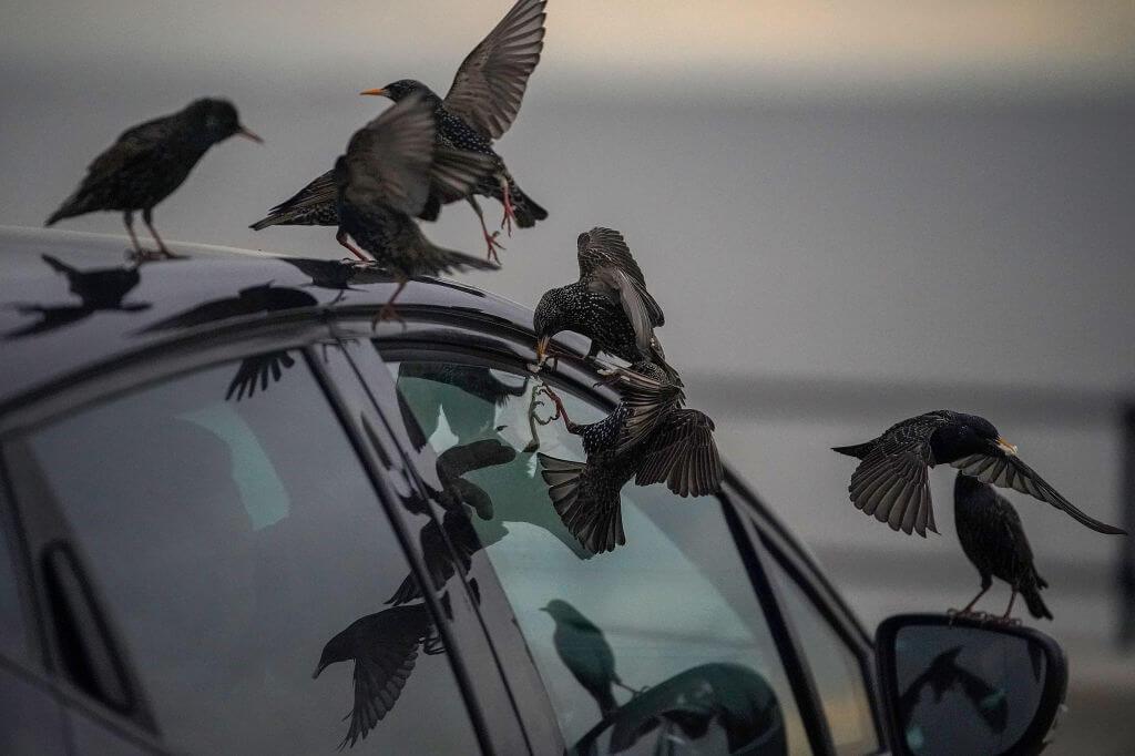 Что будет, если сбить птицу на машине