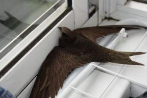 Значение примет о залетевшей в помещение птице