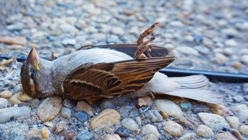 Что означает мертвая птица возле дома