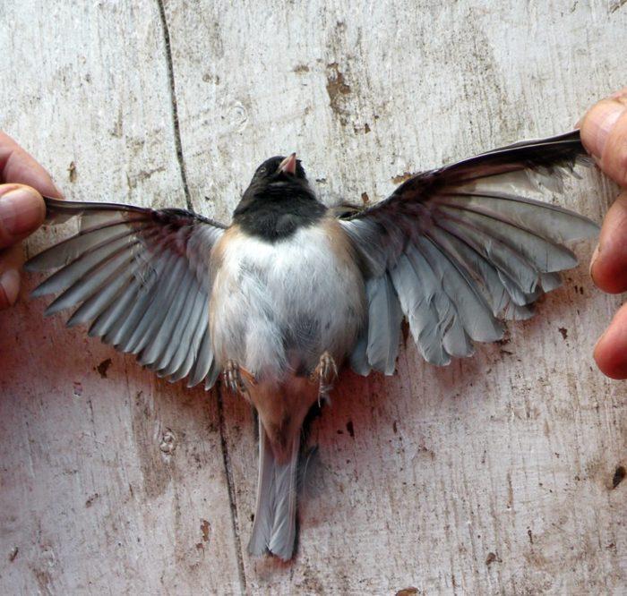 Птица упала с неба