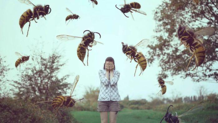 Снятся осы