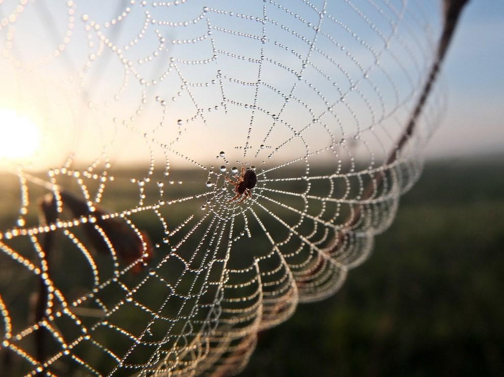 Приметы о пауке, который спускается вниз по паутине