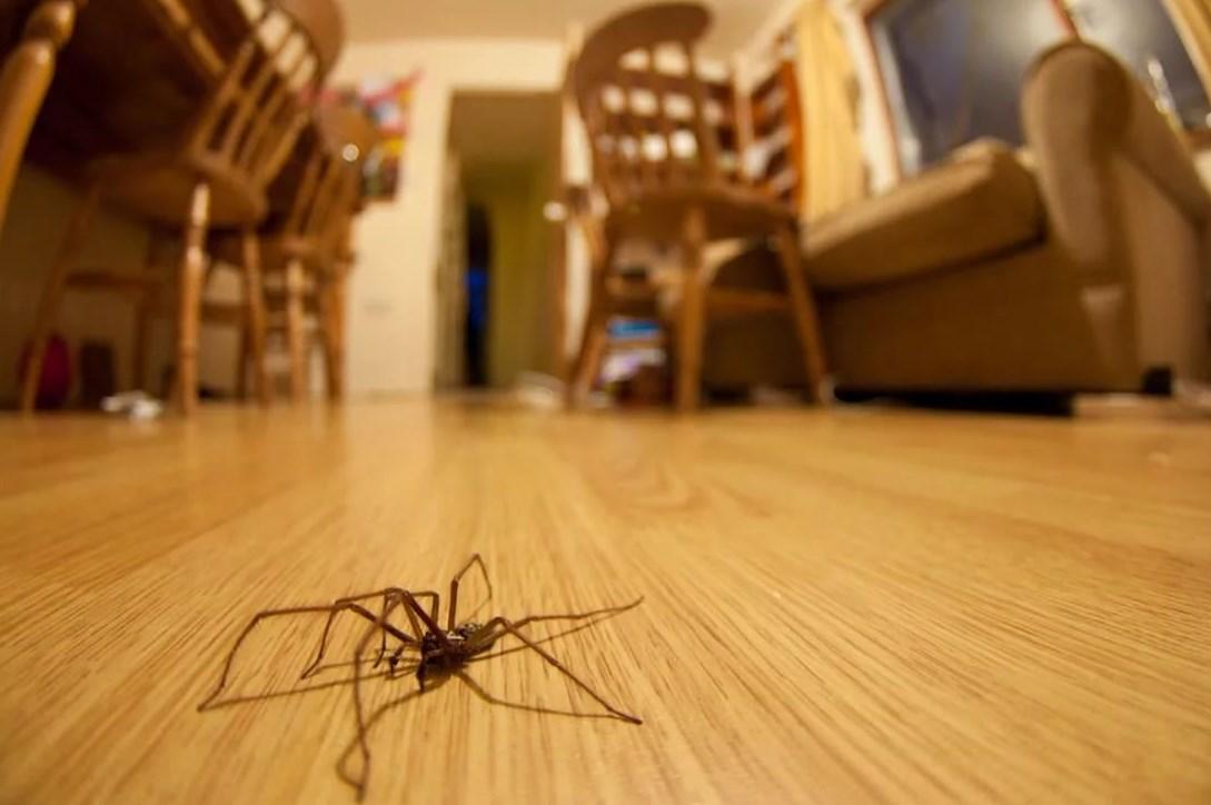 Пауки в доме: значение приметы