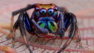 Значение приметы, учитывая размер и цвет паука