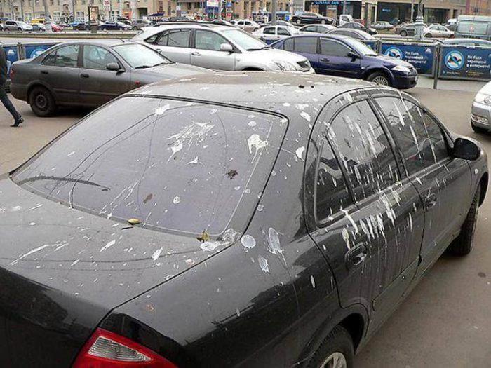 Птица накакала на автомобиль