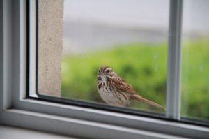 Птица смотрит в окно