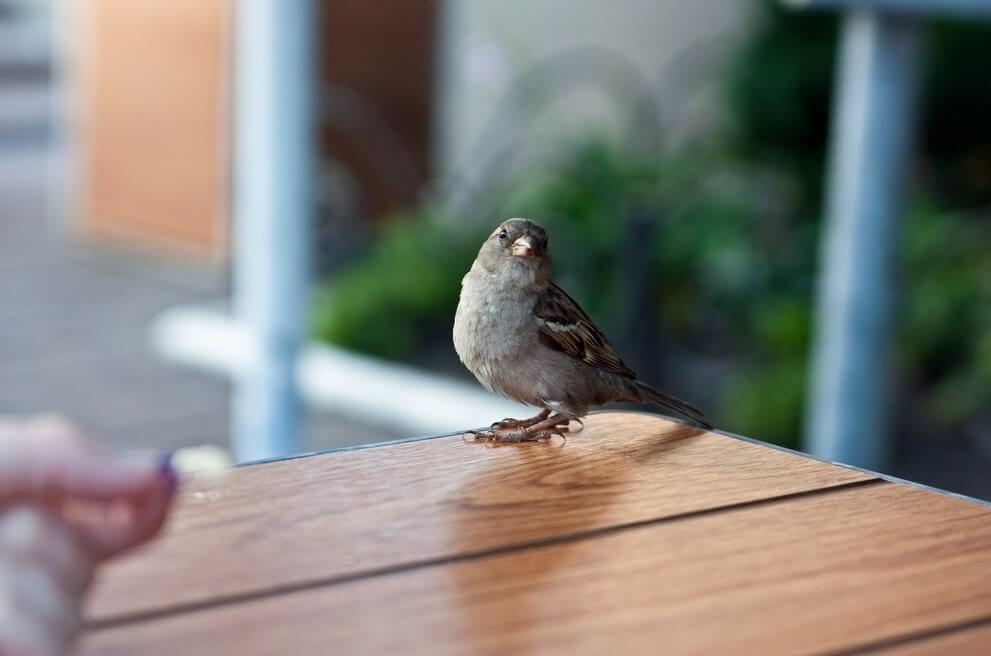 Птица залетела в дом: к чему это по народным приметам