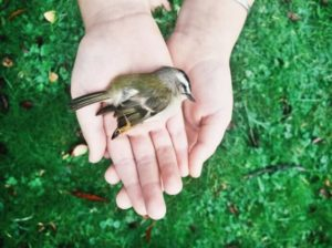 Птица умерла