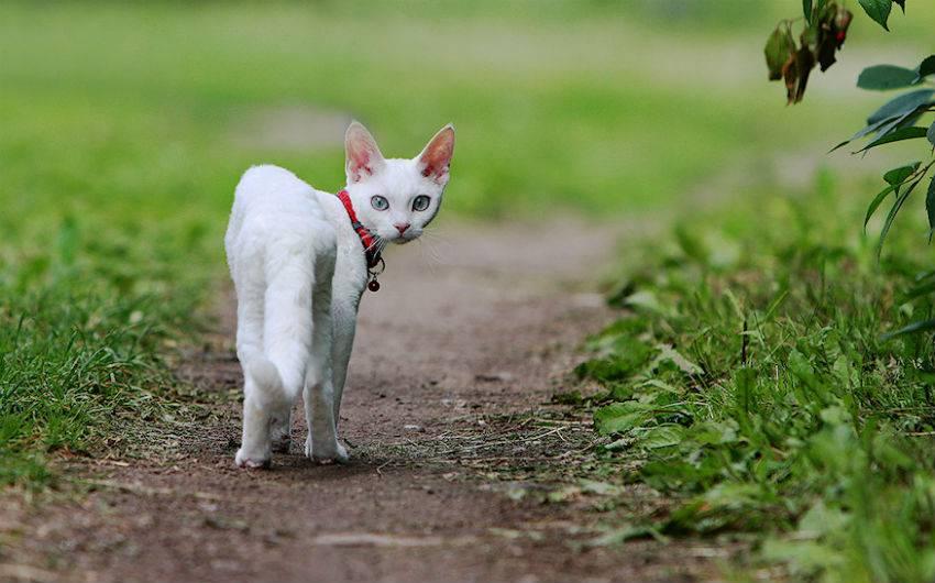 Уход кота