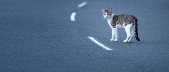 Кот ушел из дома и не вернулся