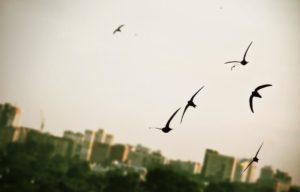 Почему перед дождем ласточки летают низко