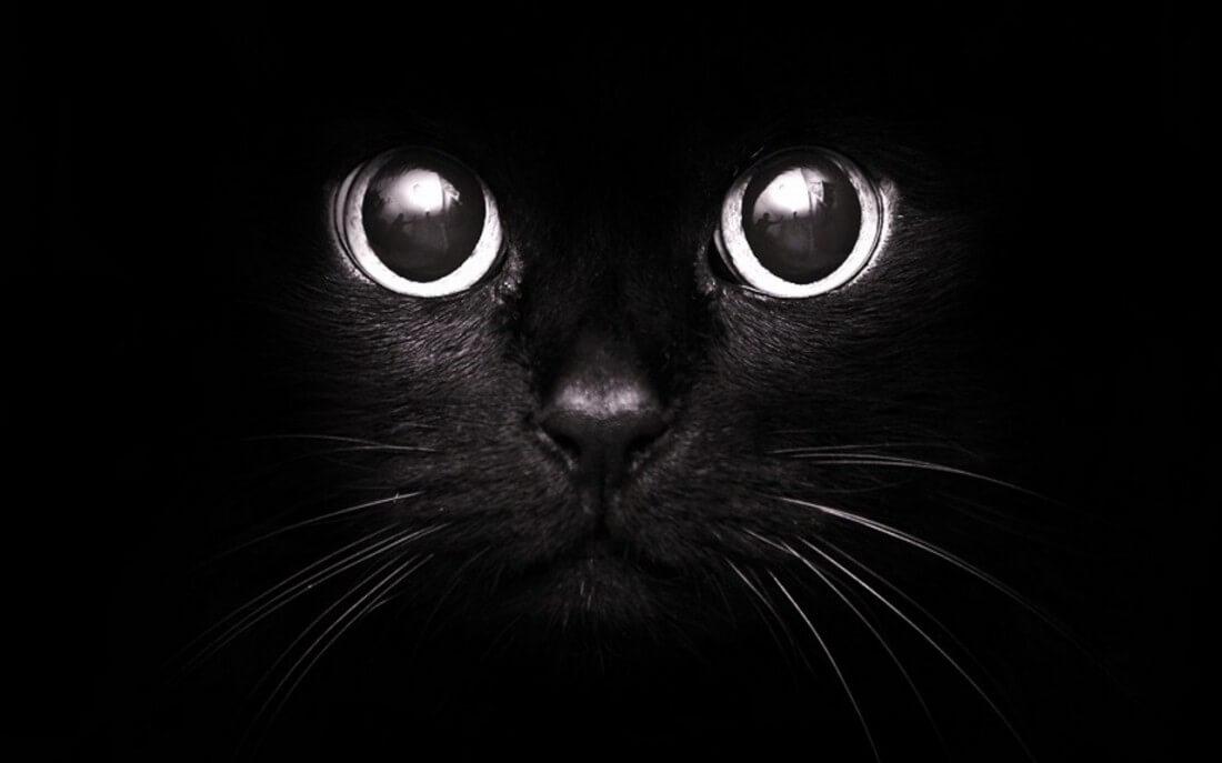 Народные приметы и суеверия
