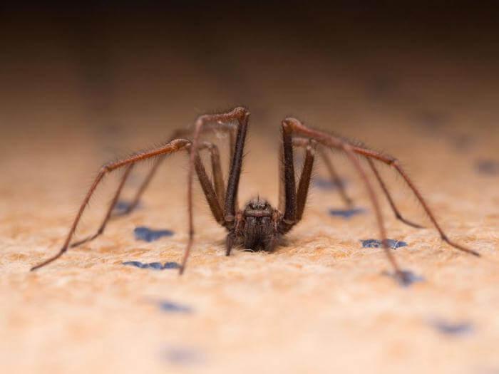 Причины не убивать паука