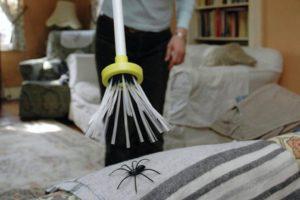 Почему нельзя убивать пауков по приметам