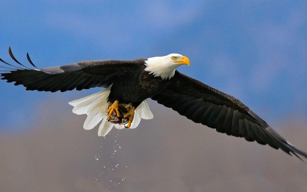 Хорошие приметы про диких птиц