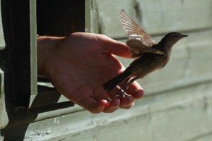 Народные приметы про диких птиц