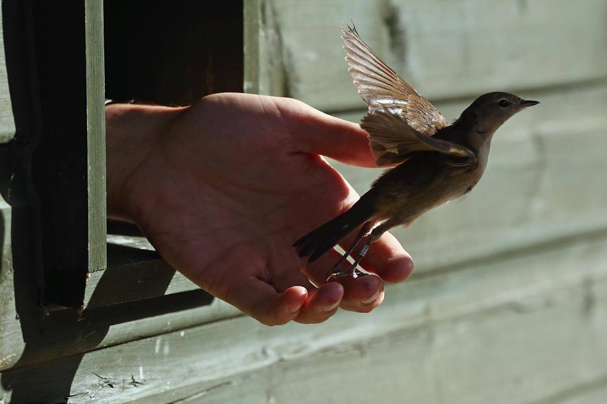 Картинка выпускать птиц из рук