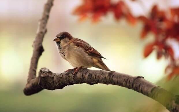 Народные приметы про птиц