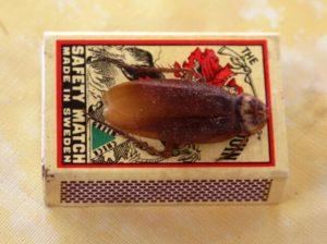 Заговор на тараканов