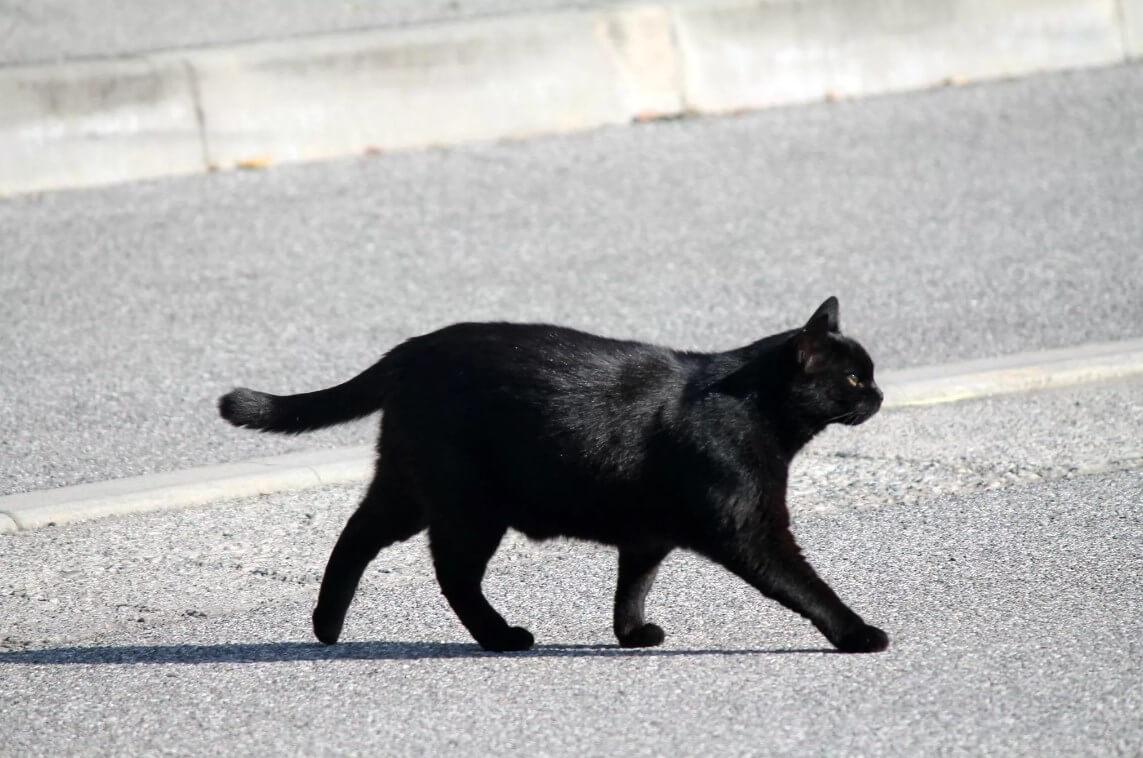 Черная кошка перебежала дорогу