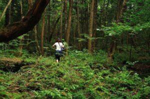 Туристические тропы в лесу самоубийц